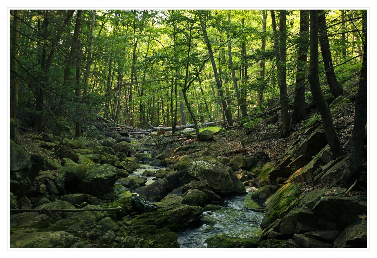 Harriman State Park 103